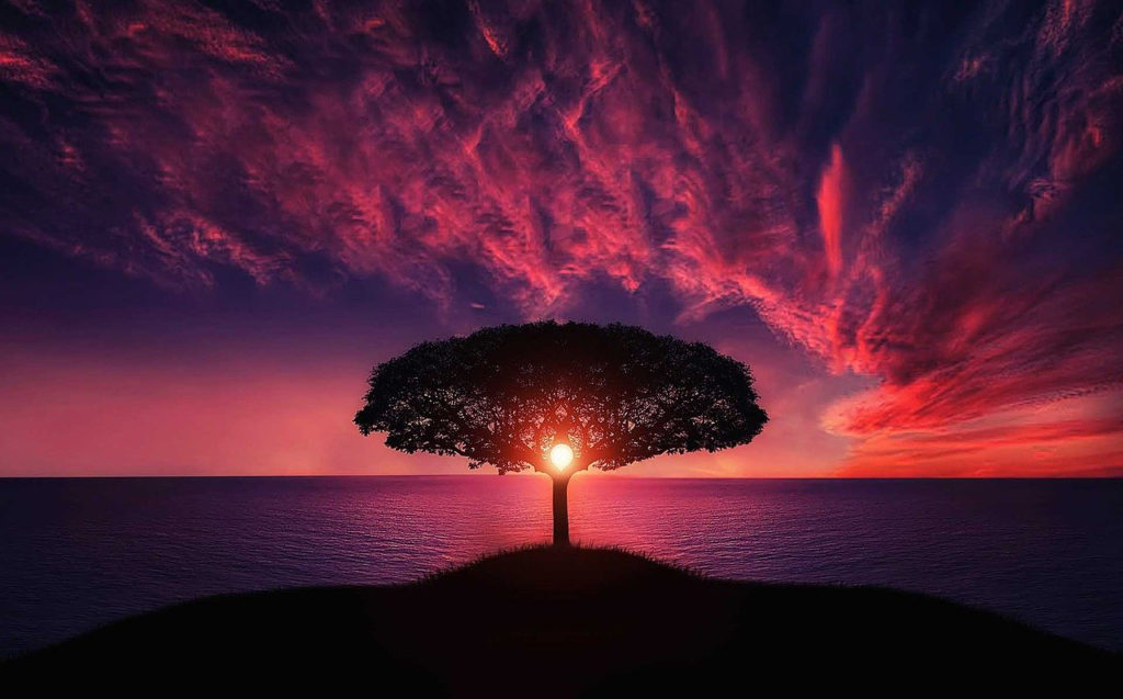 Dr. Mary Ann Markey, photo of tree with sunset